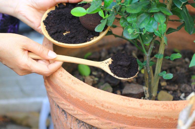coffee ground in garden